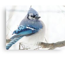 Winter Blue Puff Canvas Print