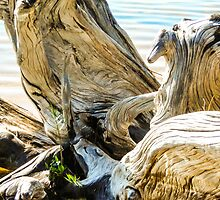 Beauchene Driftwood by Darryl Brewer