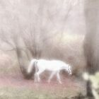 Pippin's dream white horse fantasy by campyphotos