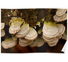 Bracket Fungus Poster