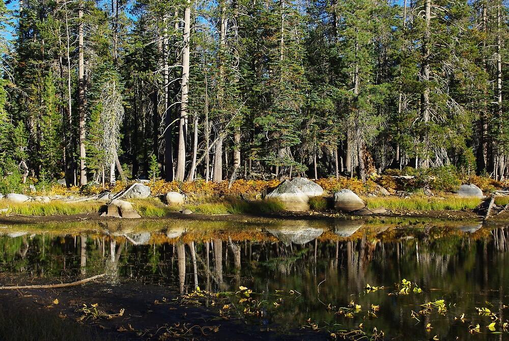 Beautiful pond near Edison Lake, California by Claudio Del Luongo