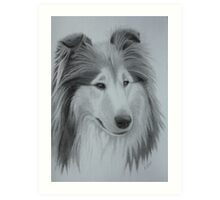 Diamond Rough Collie Art Print