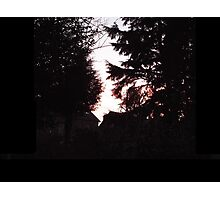 Sunset between the trees Photographic Print