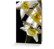Daffodils delight Greeting Card