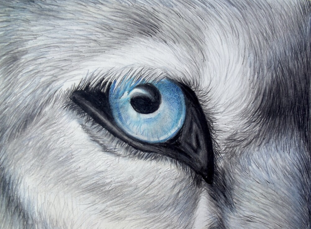"""Icy Glance - Silver Gray Wolf Blue Eye Colored Pencil ..."