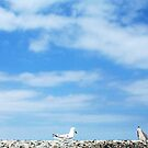No Meant No - Seagulls City Beach 14 12 12 by Robert Phillips