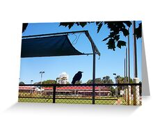 Crow On A Shade Cloth - 15 12 12 - Five Greeting Card