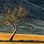 Eucalypt at Dusk - Burra Gorge, SA. by eSWAGMAN
