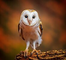 Night owl in Central Australia by eSWAGMAN