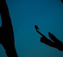 Bird At Twilight by TravisMcGuire