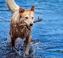 Tommie - River Dog by eSWAGMAN