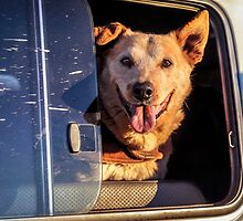 Tommie in his moving kennel by eSWAGMAN