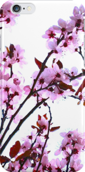Pink And White Cherry Blossom Flowers by kahoutek24