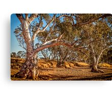 River Red Gums - Stephens Creek Canvas Print