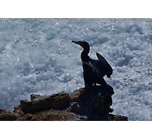 Sea / Bird Photographic Print