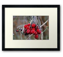 Red Ice Berries Framed Print