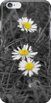 Daisies iPhone Case by mps2000