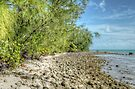 St Andrews Beach at Yamacraw on Eastern Nassau in The Bahamas by Jeremy Lavender Photography