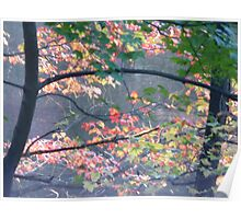 Autumn colors on Greenbelt Lake Poster