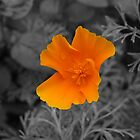 Yellow Flower by mps2000