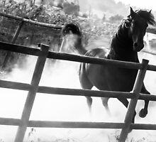 Black horse looking at me by Filomena  Francisco