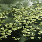 Metallic Water Lilies by sunsetrainbow
