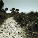 Metallic Dunes by sunsetrainbow