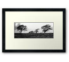 Bare bones of Winter Framed Print