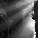 Rays of Life by Gene Walls