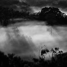 Amongst the Mist.. by debsphotos