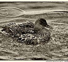 Mallard Duck, Epping Forest by stephane j. allier