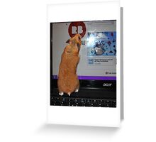 redbubble hamster Greeting Card