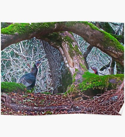 Turkeys in the Wild Poster