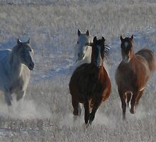 Horses running  by Adam Asar
