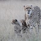 Leopard mother and cub by Adam Asar