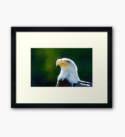 Beautiful Bald Eagle 2 Framed Print