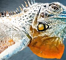 Amazing Iguana1 art2 by Adam Asar