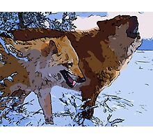 Amazing Wolves Photographic Print