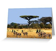 Antelopes Greeting Card