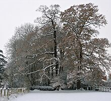Winter Trees by Jay Taylor