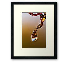 Jewel In The Garden Framed Print