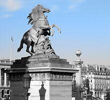 Marly Horse - Place De La Concorde, Paris, France by Neroli Henderson