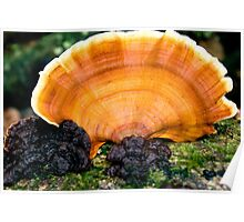 Fungi Fan Poster