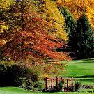 Glow of Autumn - Bisley Gardens, Mt Wilson NSW by Bev Woodman