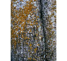 Yellow Lichen on the Tree Photographic Print