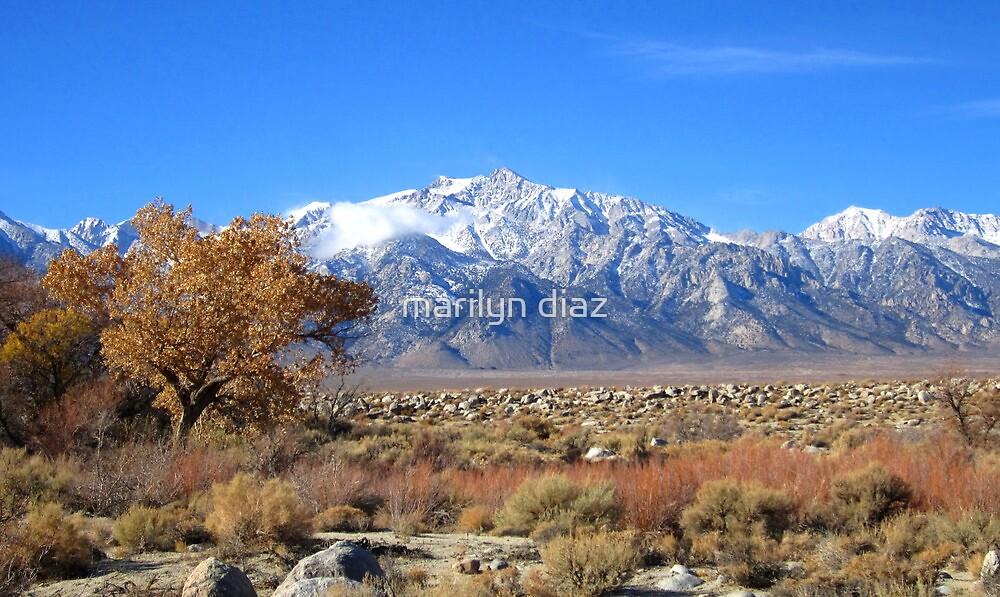 A High Sierra Winter by marilyn diaz