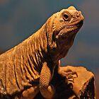 Lizard i-Pad Case by ipadjohn