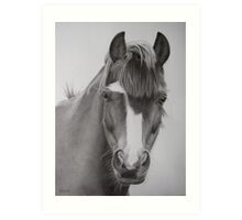 Welsh Pony Art Print