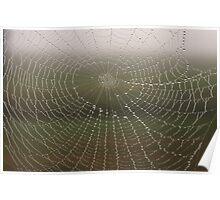 Morning Dew Spider Web Poster