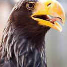 Sea Eagle  by Jeanie93
